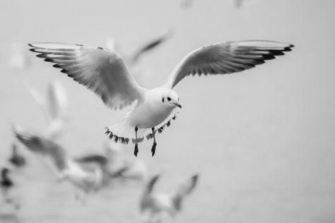 Empathy for a bird