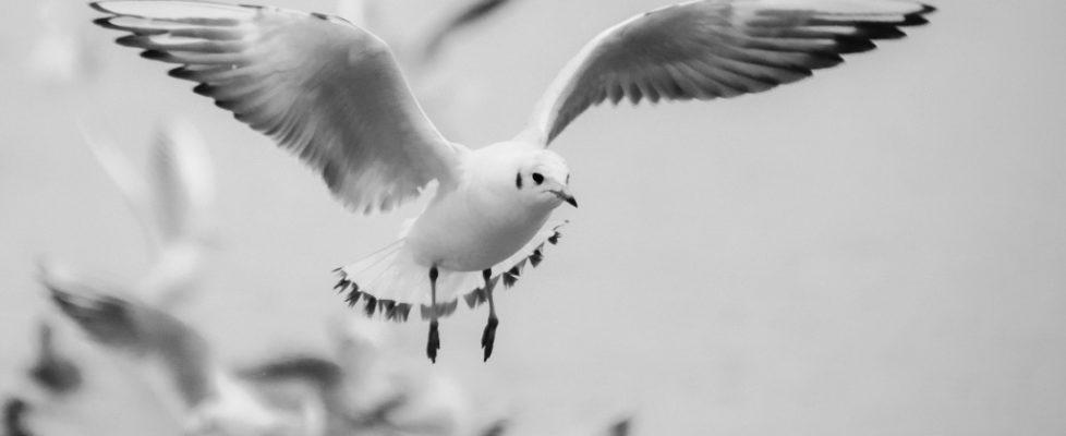 seagull 271103_1920